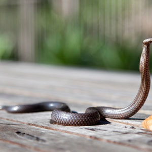 House Leaders Introduce Bills to Prevent COBRA from Biting People Eligible for Medicare