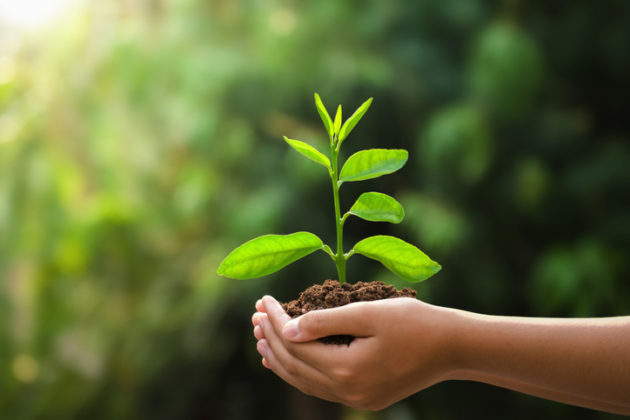 person holding young plant with soil in hands outsdie
